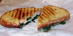 Turkey Panini